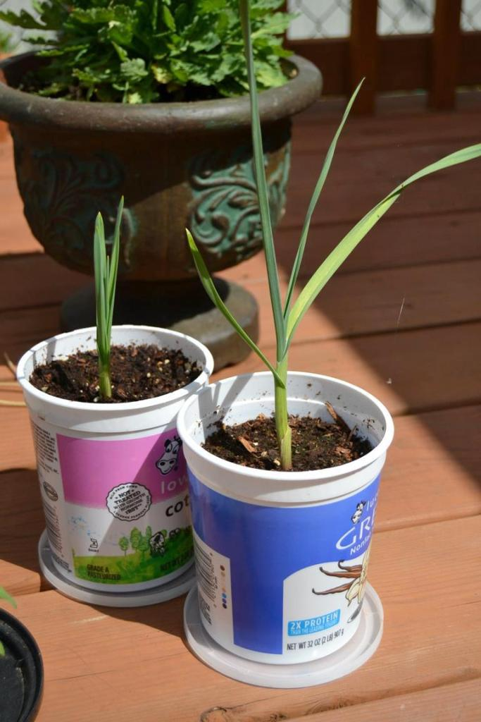 plastic-cup-for-garden