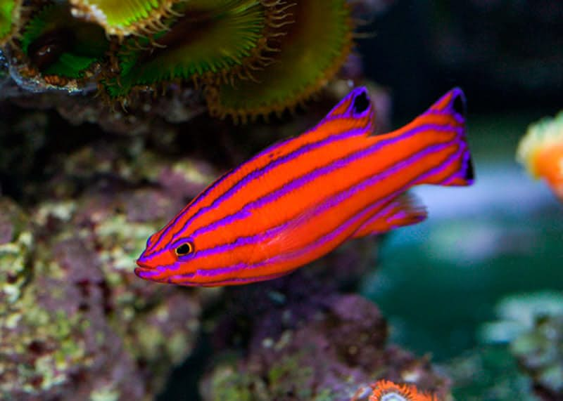World S Top 20 Colourful Fish For Your Aquarium Half Samosa