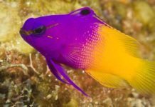 colourful fish