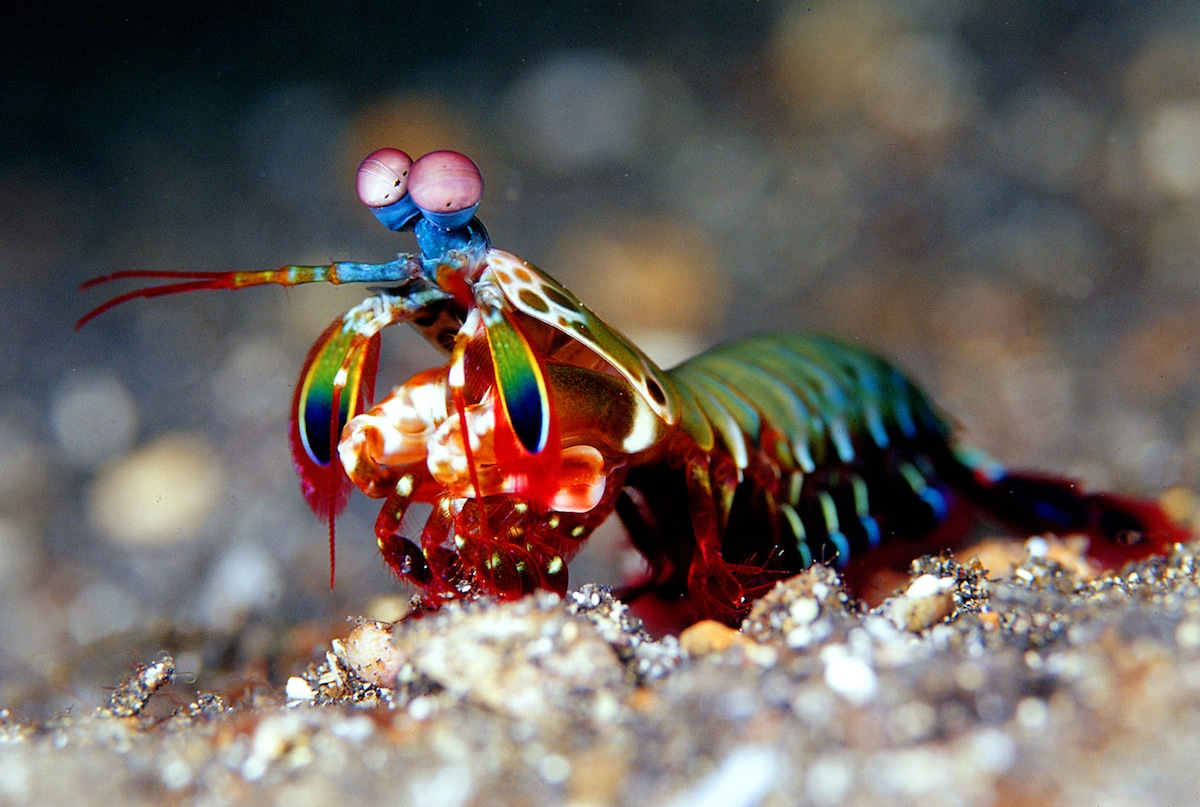 colourful fish aquarium mantis shrimp