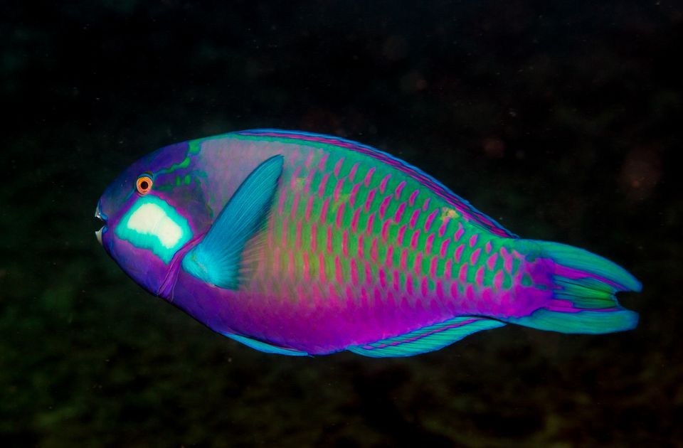World s top 20 colourful fish for your aquarium half samosa for Show me pictures of fish