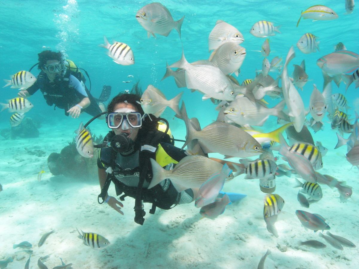 scuba diving destinations in India goa