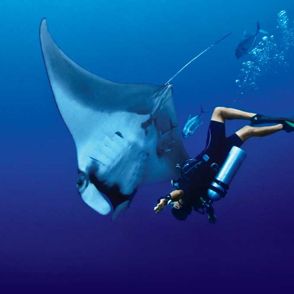 scuba diving destinations in India pondicherry
