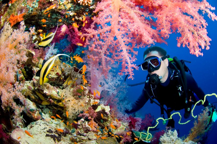 scuba diving destinations in India andaman nicobar