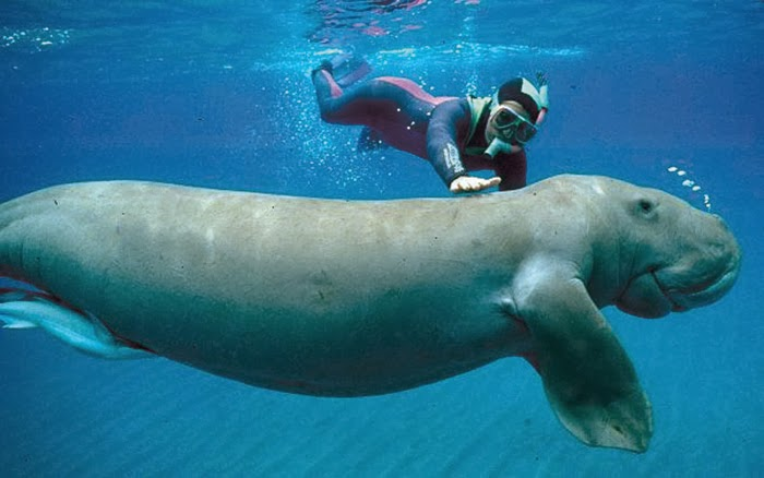scuba diving destinations in India andaman nicobar dugong