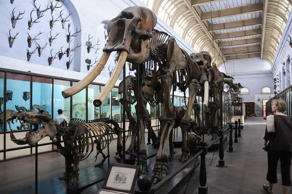 Indian Museum ice age jurassic skeletons