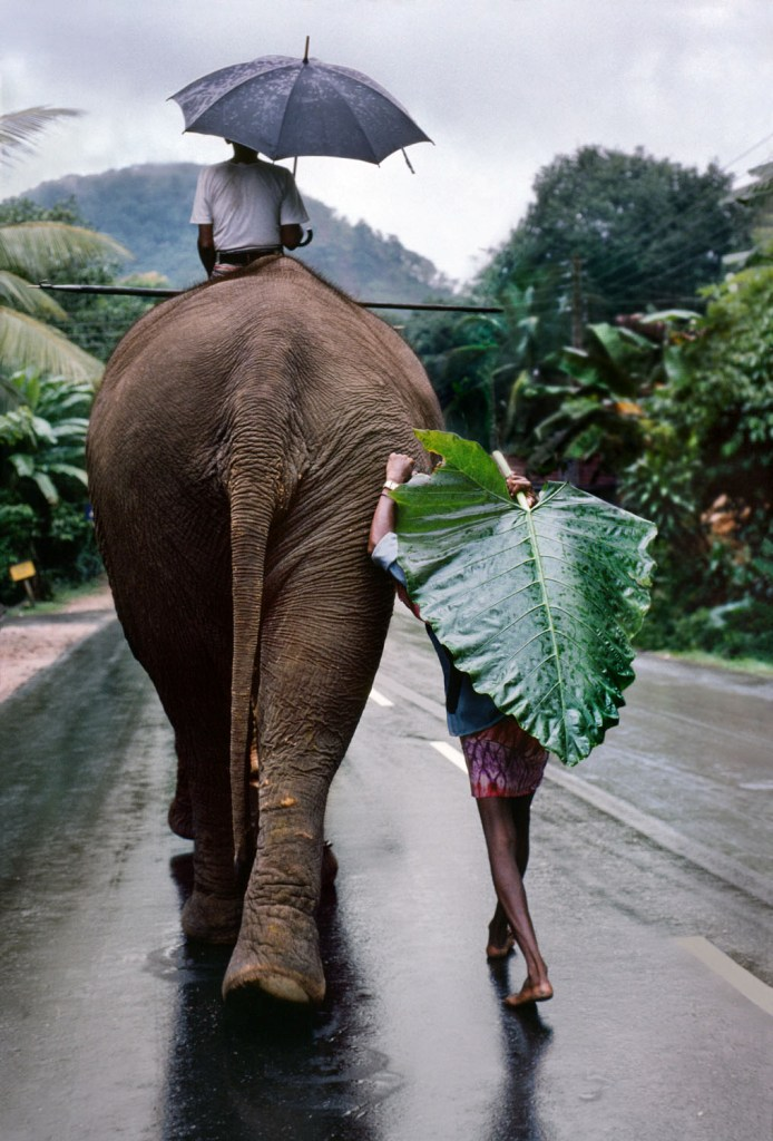 monsoon sri lanka rains elephant