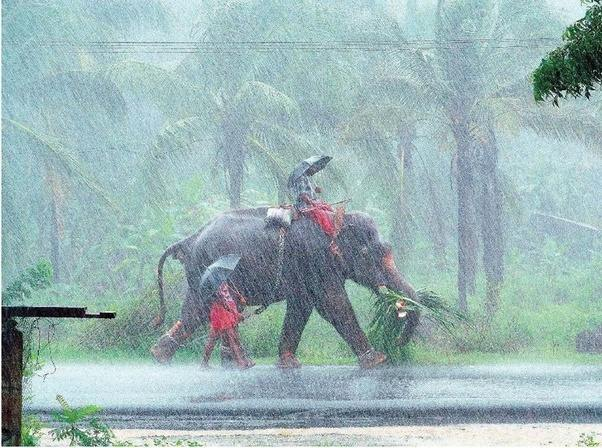 monsoon india rains elephant