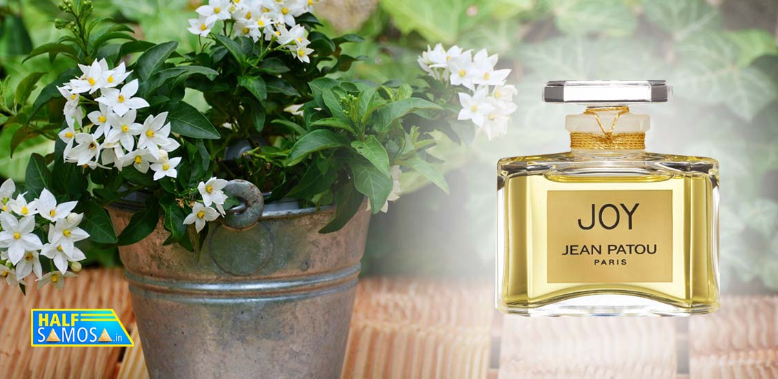 World S Costliest Perfume Made From The Flower That Grows