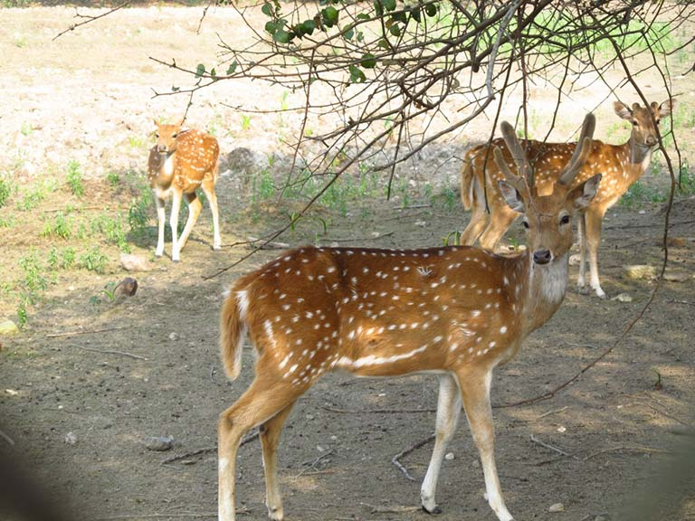 kolkata weekend destinations parmadan deer park