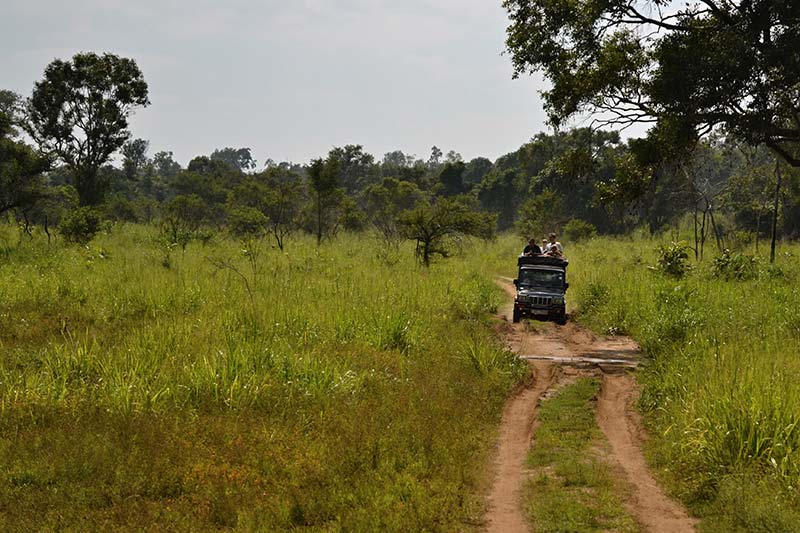 what to dos and not to do on a safari, safari etiquette