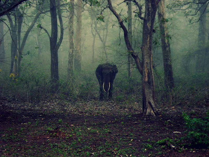 Best Safaris In India elephant
