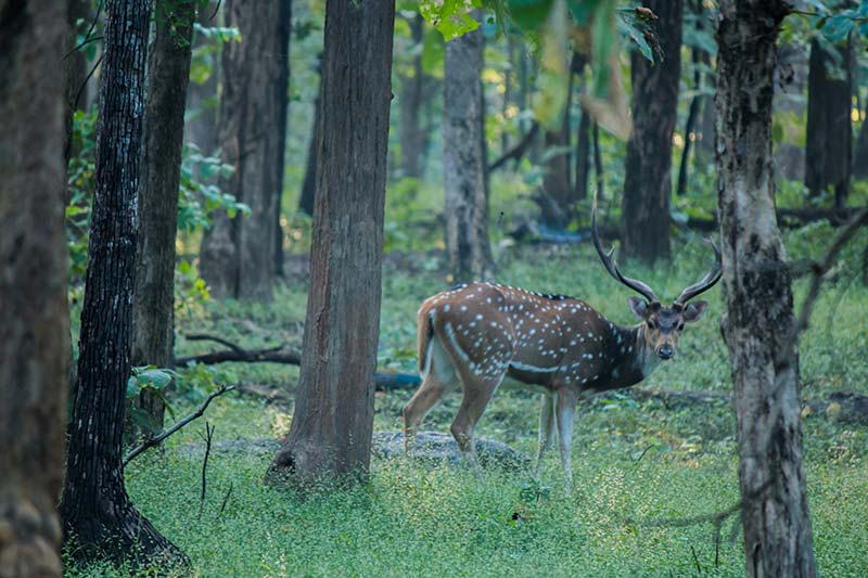 Best Safaris In India deer
