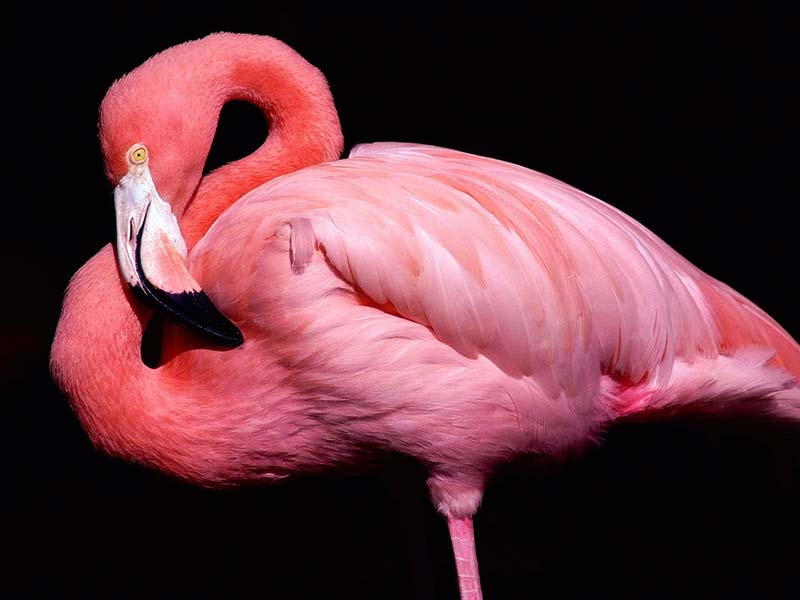 most beautiful birds