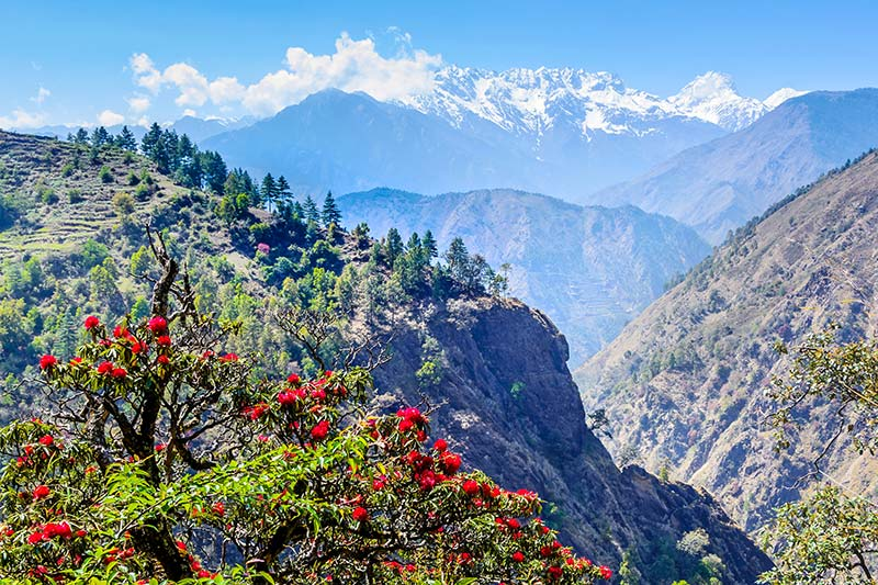 Beauty of the Himalayas