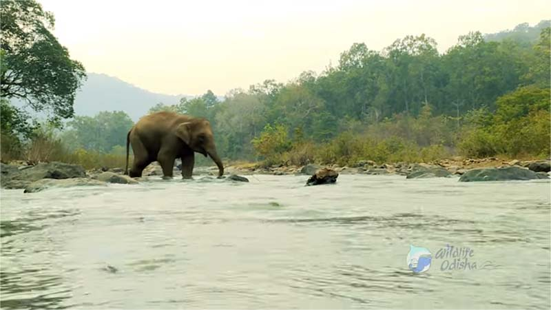 Simlipal Nature Camp elephant