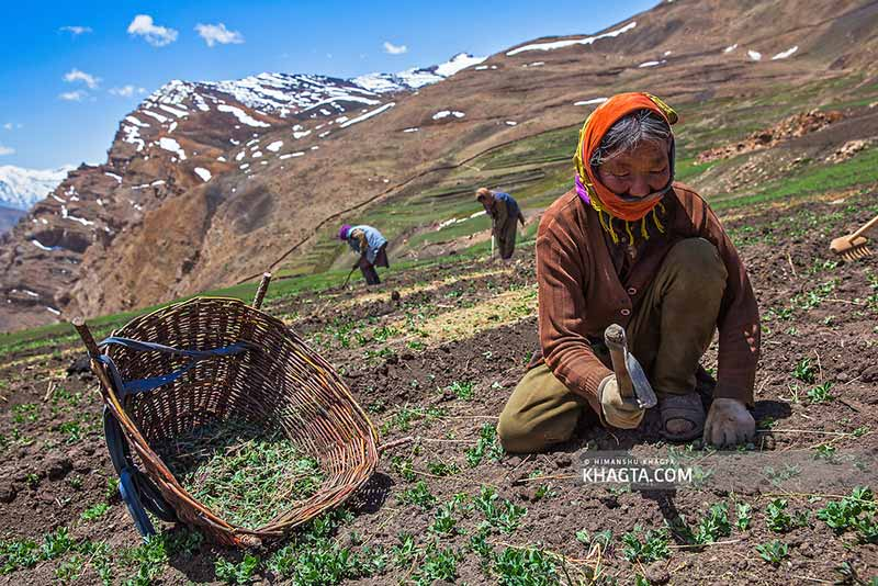 Lahaul and Spiti Valley local people and agriculture
