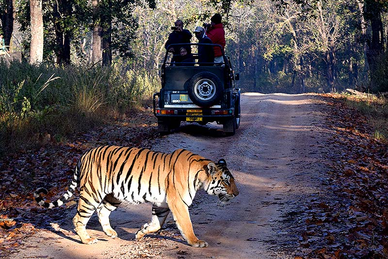 Best Places To Stay At Ranthambore National Park And Enjoy The Safari